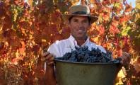 chile_vino